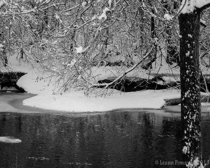 Snow on Root River