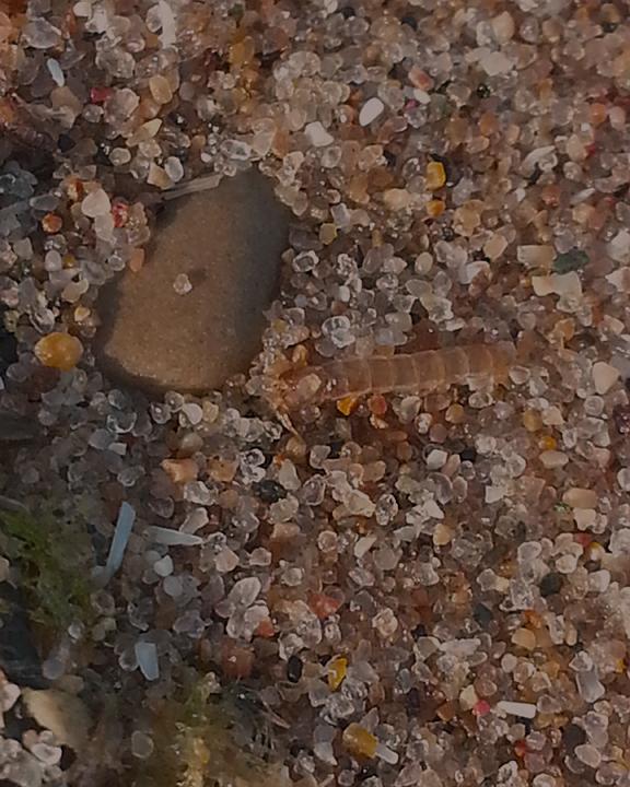 Beach Sand 8/12/13